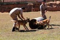 Cães são treinados para auxílio do Corpo de Bombeiros em salvamento e resgate