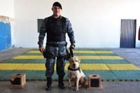 Força Tática Araguaia terá cães para atuar no combate às drogas